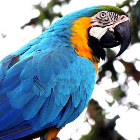 exposition oiseaux dordogne